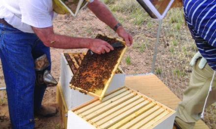 Bees make life sweet at Tamaya