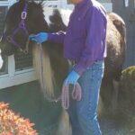 Horse visits RR seniors