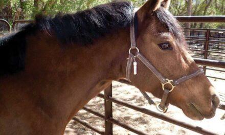 Investigators seek person who killed, butchered Corrales pony