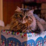 Guest column: Pet-safe DIY toys and treats