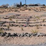 Vacant land becomes demonstration of water harvesting