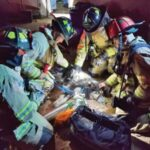 Firefighters save 2 dogs, hamsters
