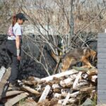 Local search canines find their quarries, dead or alive