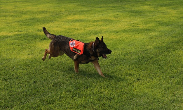 PHOTOS: Sandoval County Fire Dept. conducts search and rescue dog training session
