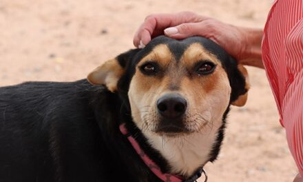 County sees dire need for pet fostering