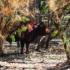 Family ranch in Algodones attracts 'Big Sky'